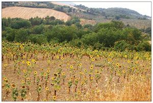 Sunflower Army