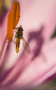 Pausing Fly