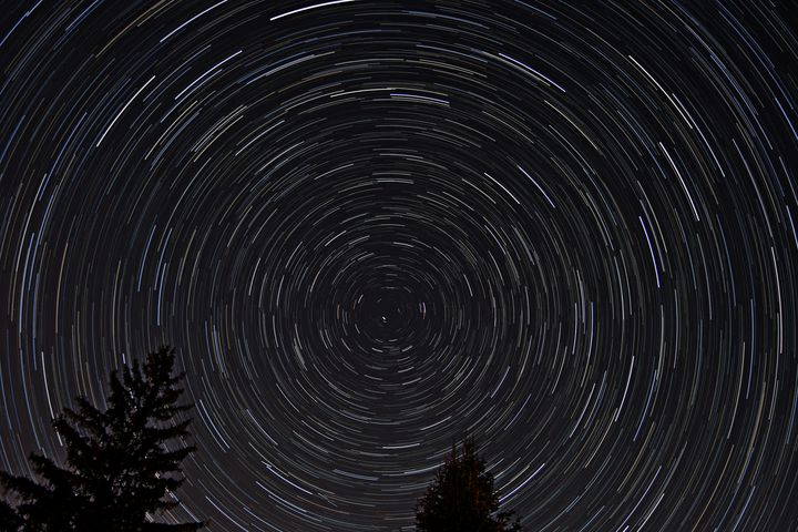 Star Trails in the pines - 4 AM Photography