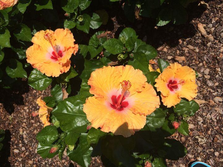 The Brightness of Orange - A.M. Paintings