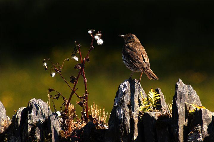 Bird resting - Photowitch