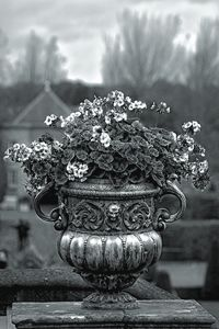 Black&white flower pot