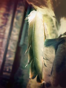 Ceremony Feathers