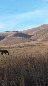 Rolling hillside