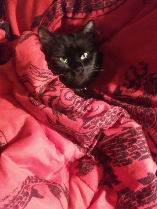 Comfortable Cat - DarkDemiseArt