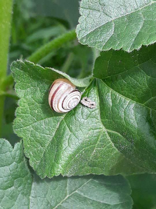 Snail work - Edy Art Gallery