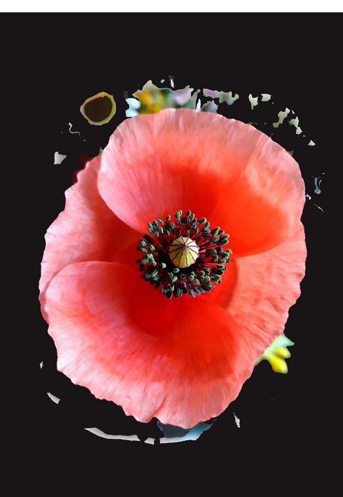 Poppy symphony - Edy Art Gallery