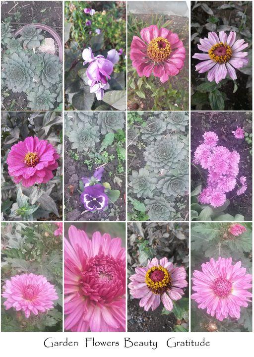 Garden Flowers Beauty Gratitude - Edy Art Gallery