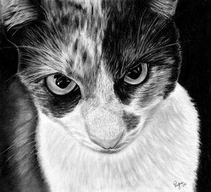 Livia, charcoal drawing
