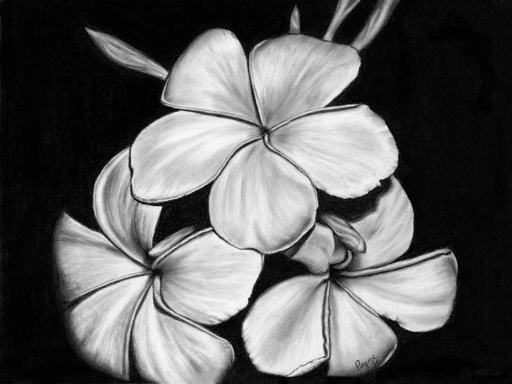 Plumeria, charcoal drawing - Teresa Payne Art