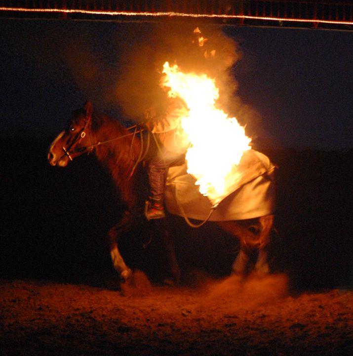 Brave Horse - Bella Images