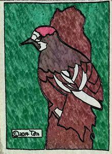 Acorn Woodpecker - Tata Kimfa