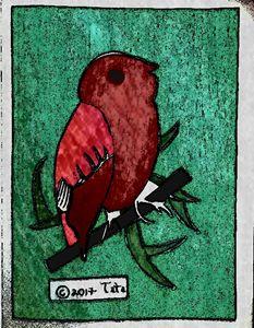 Alder Flycatcher - Tata Kimfa