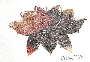 Lotus Bundle - Tata Kimfa