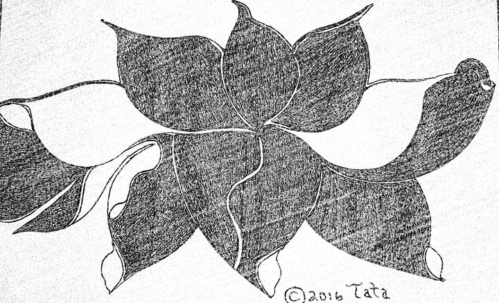 Lotus Dance - Tata Kimfa