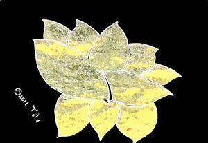 In the Heart of a Lotus - Tata Kimfa