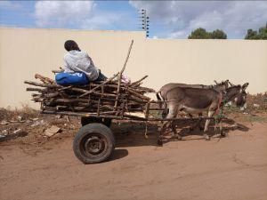 Donkey Cargo, Photography