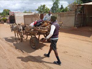 Donkey Cargo Photography