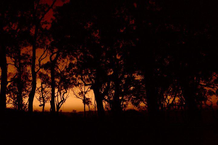 Sunset Daze - Treehead Collective