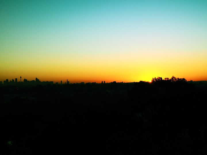 Sydney Skyline - Treehead Collective