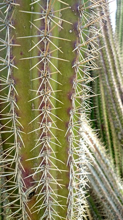 Cactus deligth - Euler
