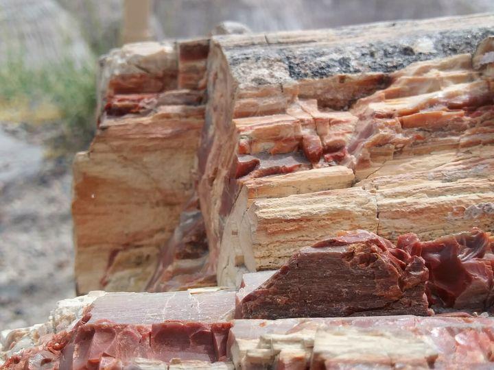 Bacon Log - Meagen