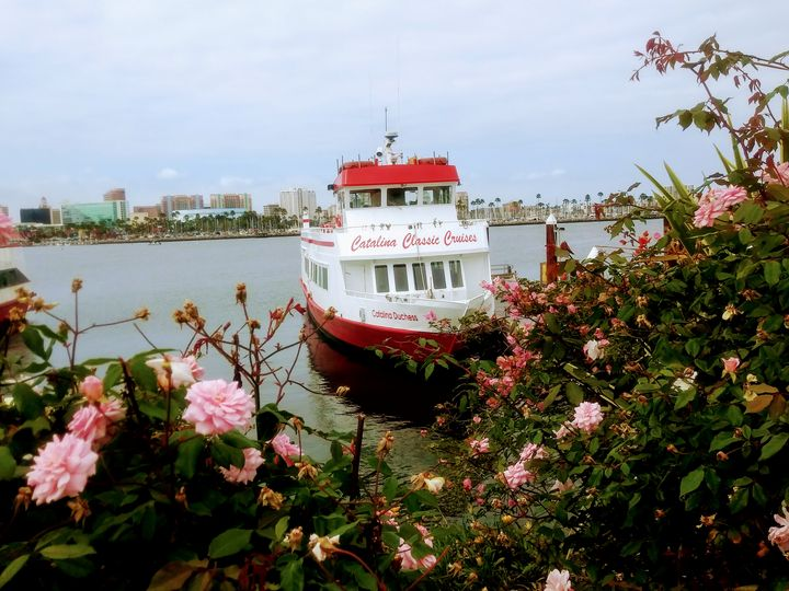 Roses and Boat - Meagen