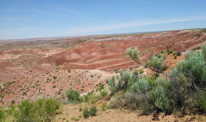 Red Desert - Meagen
