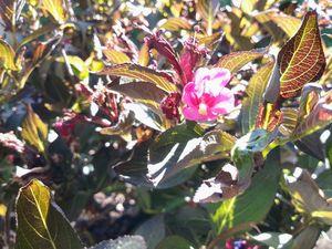 Tiny Flower