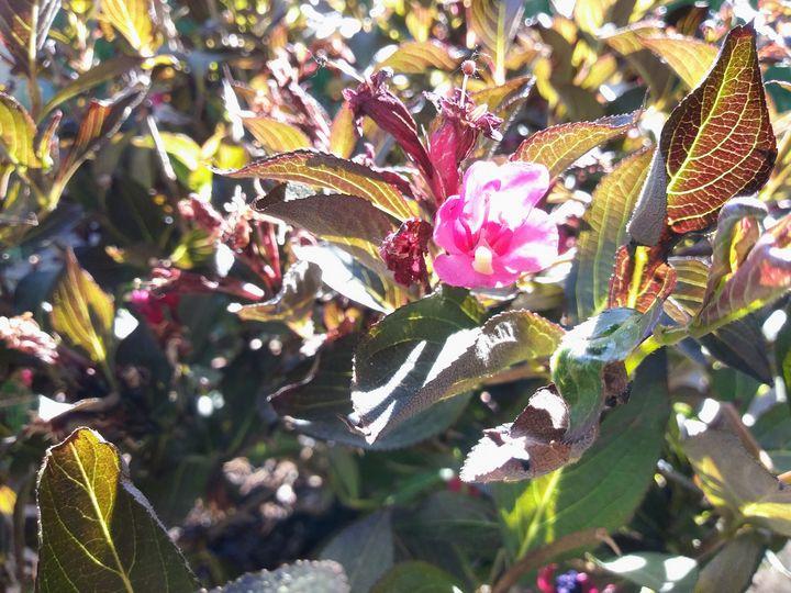 Tiny Flower - Meagen