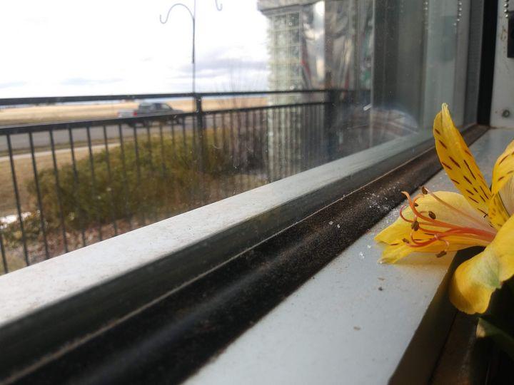 Flower View - Meagen