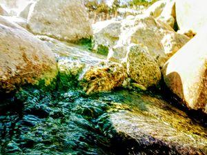 Algae Water