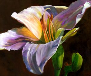DAYLILY IN THE AFTERNOON