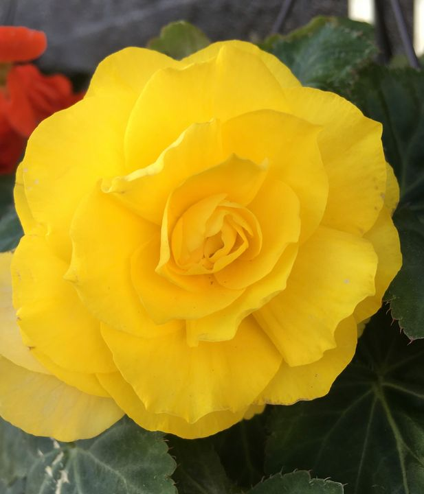 Yellow flower - Lonely artist