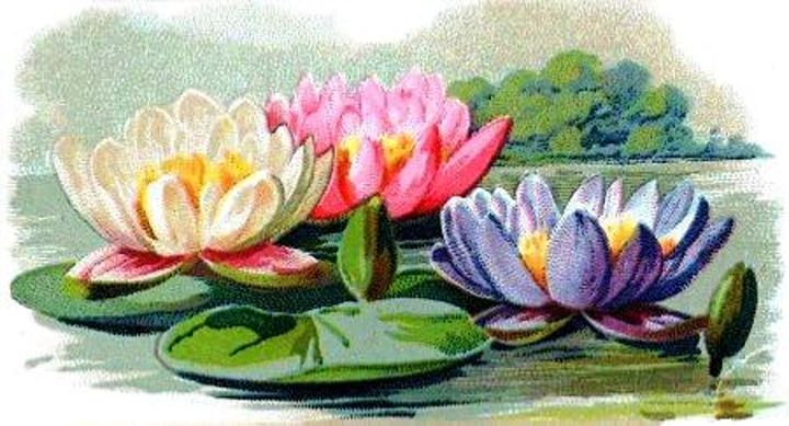 Vintage Lily Pad Floral Pond Lilies - Sara Valor