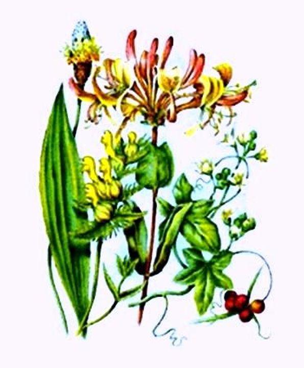 Vintage Wildflowers - Sara Valor