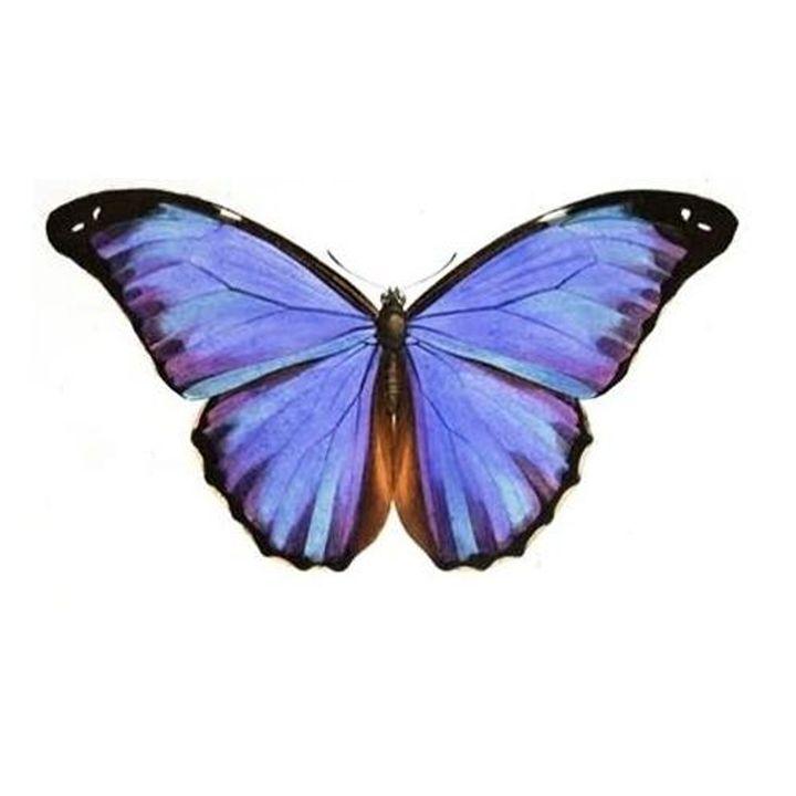 Vintage Butterfly - Sara Valor