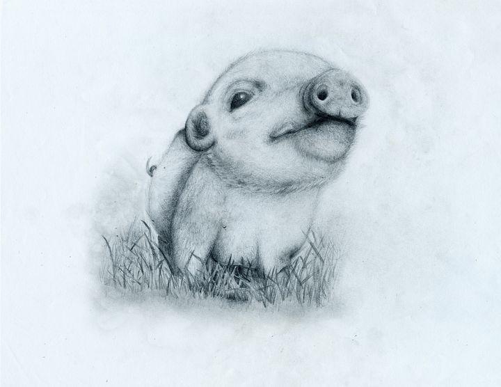 Piggy - Animal Drawings by Tiana