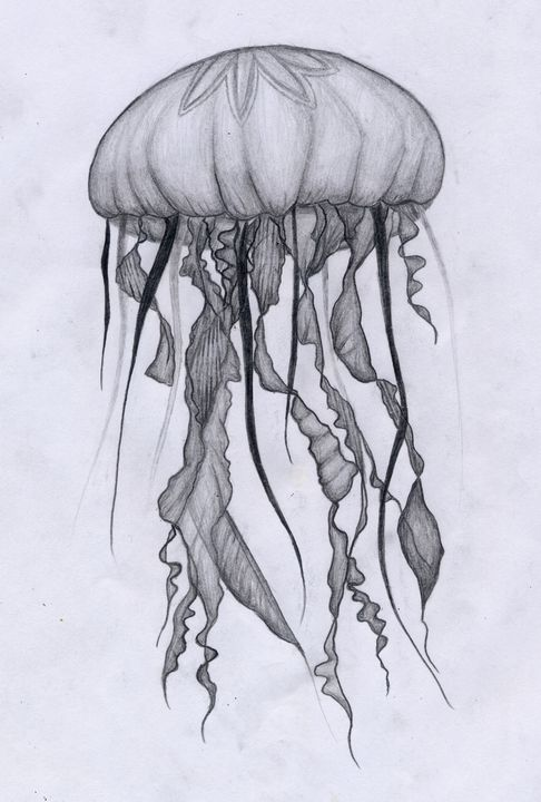 Jellyfish - Animal Drawings by Tiana