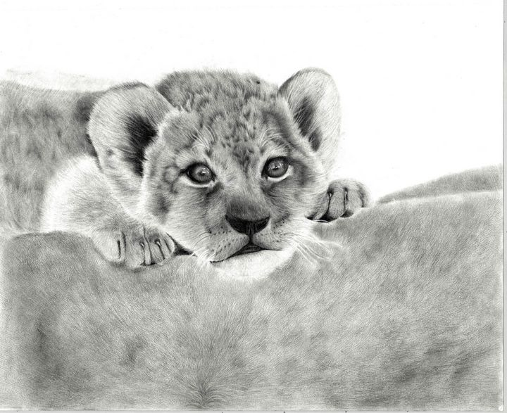 Lion Cub Resting on its Mother - Animal Drawings by Tiana