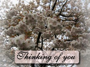 Floral Thinking of you greeting card