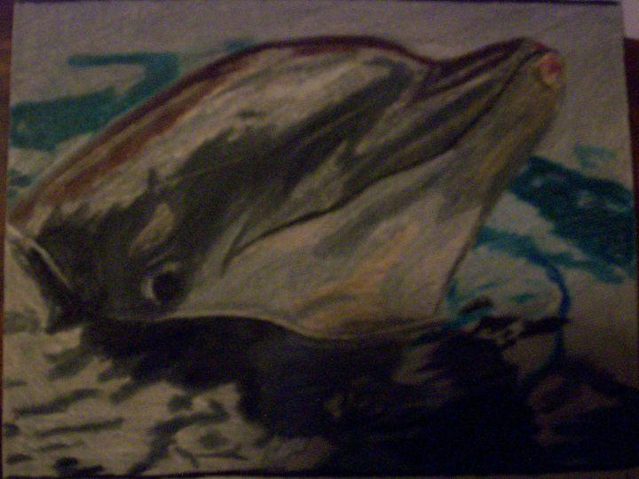 Dolphin Pencil Drawing - Portrait Hart Studios