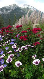 Wildflowers in Banff