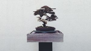 Digital Bonsai