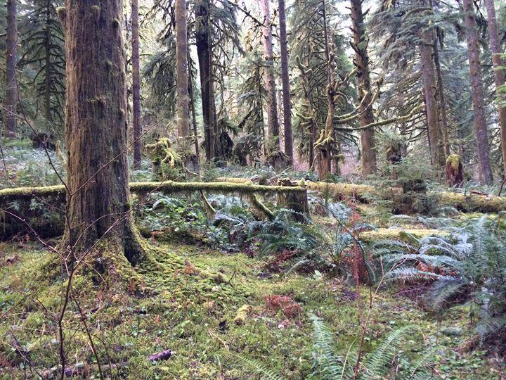 Oregon Forest - Nature