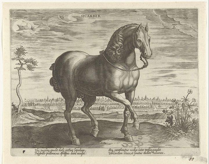 Stradanus~Paard uit Gelre - Canvas printing