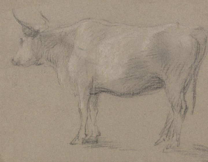 Thomas Gensboro~Study of a Cow - Canvas printing