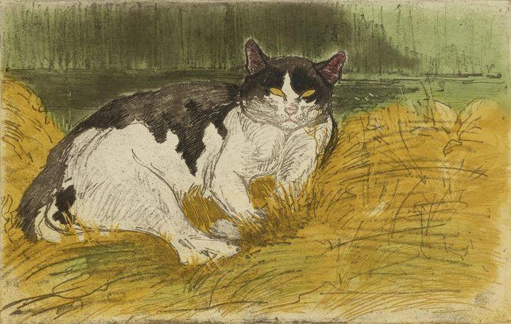 Théophile Steinlen~Vieux Chat Noir e - Canvas printing