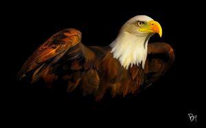 Bald Eagle - Aer Prints