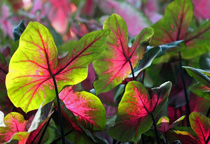 Aglow - Images by Suzanne Gaff